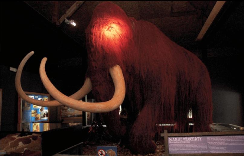 Mamut. Wychowany  Epoce Lodowcowej myślałem, że mamuty były większe.