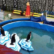 rabkoland pingwiny ice race