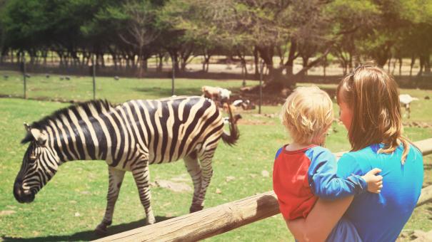 Trzeci zamknięty park po dinozaurach w Wolinie i RPA? – Zoo Safari Świerkocin