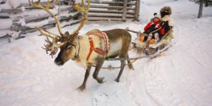 Kawałek Laponii obok Karpacza spełnieniem marzeń!