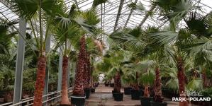 Tropikalny ogród w Suntago – palmy już się aklimatyzują!